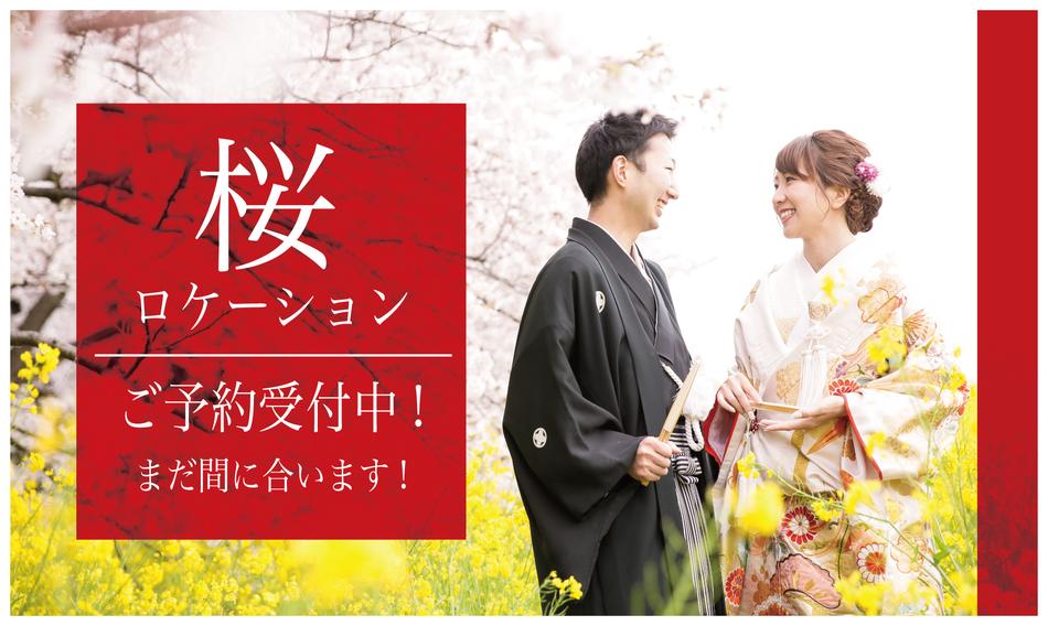 201903_SAKURA桜_アートボード 1.jpg